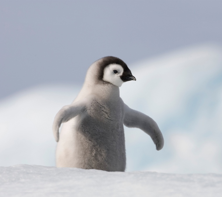 Let's spend money on tickets to see baby penguins instead of standing in a loud, sweaty venue with people we barely know.